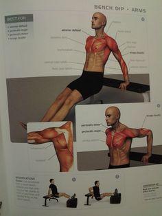 ARMS: bench dip (anterior deltoid, triceps brachii, pectoralis major & minor) ? reps