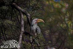 Yellow-billed Hornbill - Wild Art   Wild Art