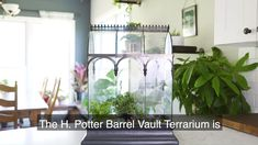 Glass Terrarium Wardian Case by H Potter Terrarium For Sale, Terrarium Plants, Succulent Terrarium, Indoor Garden, Indoor Plants, Miniature Orchids, Soil Layers, Healthy Environment, Curved Glass