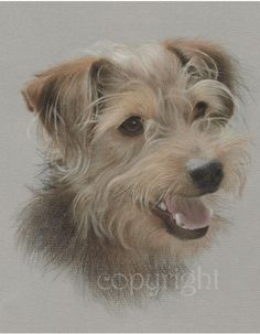 Commissioned pastel portrait of Alfie