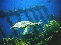 Wreck of the Rhone scuba dive, BVIs