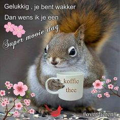 Good Morning Animals, Animals And Pets, Squirrels, Romantic Pictures, Pets, Chipmunks, Squirrel, Red Squirrel