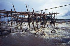 fishing the congo river | fish traps wagenia fisheries congo river at kisangani fish traps