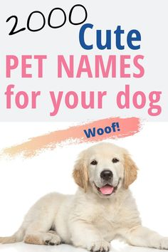 Dog Clothes Female 2000 Popular Cute and Unique Names for your pets names for dogs names.Dog Clothes Female 2000 Popular Cute and Unique Names for your pets names for dogs names Cute Pet Names, Girl Dog Names, Puppy Names, Unique Names For Pets, Pet Names For Dogs, Cat Names, Dog Grooming Shop, Dog Grooming Clippers, Dog Breeds Little