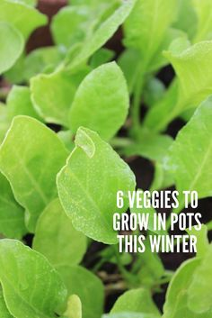 6 vegetables to grow