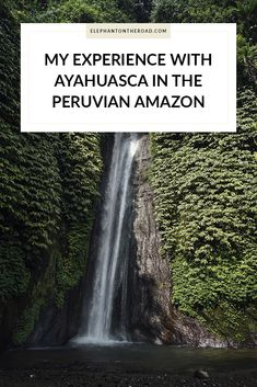 My Experience With Ayahuasca. Peruvian Amazon. Natural Medicine. Elephant on the Road.
