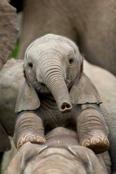 Wears a heart on the tip of its trunk :) Elephant Calf by Brendan Jennings