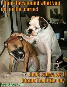 """""""I think they found what you did on the carpet...don't worry, we'll blame the little guy."""" hahaha"""