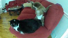 More Monkey GIFs - Monkeys Animals GIFs