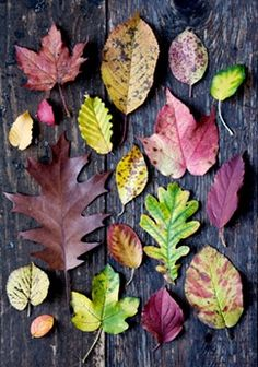 autumn art scrapbook
