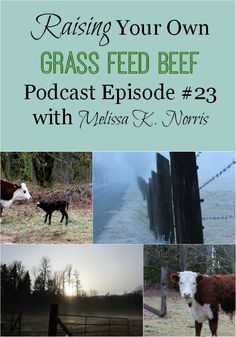 Raising Your Own Grass Fed Beef Podcast episode Learn how to get started raising your own grass fed beef, tips, amount of pasture per animal, and how to raise beef without your own property. Cattle Farming, Livestock, Backyard Farming, Chickens Backyard, Raising Cattle, Raising Farm Animals, Mini Cows, Homestead Farm, Future Farms