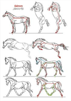 La foto - Zeichnung tutorial - Home Painted Horses, Horse Drawings, Animal Drawings, Animal Sketches, Drawing Sketches, Drawing Art, Sketching, Horse Sketch, Horse Anatomy