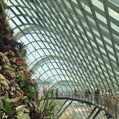 Garden By The Bay Award gardensthe bay #gardensbythebay #singapore #flowers