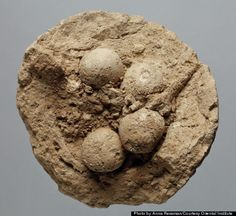 Researchers studying clay balls from Mesopotamia have discovered clues to a lost code that was used for record-keeping about 200 years befor...