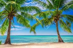 Image result for palm trees
