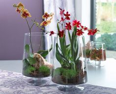 Indoor Plant Care: No Chance for Pests - Glassware with Orchid . - Fleures et plantes - Orchideen Orchid Centerpieces, Orchid Arrangements, Artificial Flower Arrangements, Artificial Flowers, Orchid Pot, Orchid Plants, House Plant Care, House Plants, Mini Orquideas