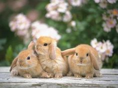 animales tiernos [muy lindo] - Taringa!