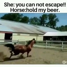 This horse has great skills - Horses Funny - Funny Horse Meme - - My question is why didn't the horse just jump OVER the fence? The post OMG! This horse has great skills appeared first on Gag Dad. Funny Horse Videos, Funny Horse Memes, Funny Horses, Cute Horses, Funny Video Memes, Funny Animal Memes, Funny Animal Videos, Cute Funny Animals, Funny Animal Pictures
