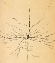 A hippocampal pyramidal cell, I believe, drawn by the great neuroanatomist Santiago Ramón y Cajal (1852-1934)