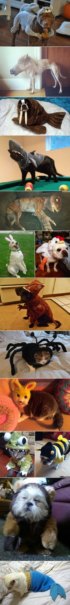 Animals dressed as other animals. LOL, the cat-spider.