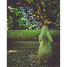 【shinoogawa0325】さんのInstagramの写真をピンしています。《『木陰×兎×深緑』  暑いなぁ、お水冷たくて気持ちよさそうだなぁ  明月院より  #写真が好きな人と繋がりたい  #カメラが好きな人と繋がりたい  #ファインダー越しの私の世界 #写真 #photooftheday #photo  #eoskiss #canon #eoskissx7i #一眼レフ #公園 #林 #緑 #green #forest  #nature_perfection #naturephotography #leafs #naturelovers  #おさんぽ #daytrip  #東京カメラ部 #カメラ女子 #カメラ初心者 #portrait #portraitphotography #明月院》