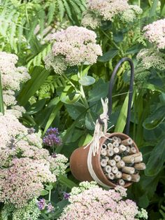 How to make a bee hotel using bamboo canes and an old plant pot #homesfornature