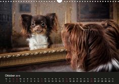 Chihuahuas - Cool & Cute - CALVENDO Kalender - #hunde #kalender