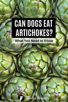 Can dogs eat artichokes? Keep your dog safe and find out what you need to know about dogs eating artichokes and artichoke hearts. #dogsafety #doghealth #dogs #doglovers #doginformation #dogownertips #pethealth #artichokes Pet Nutrition, Animal Nutrition, Dog Health Tips, Pet Health, Homemade Dog Treats, Healthy Dog Treats, Dog Treat Recipes, Dog Food Recipes, Sick Dog