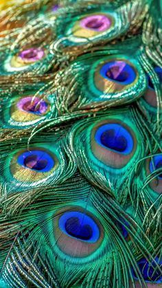 Plumage, feathers, bird, peacock, 720x1280 wallpaper