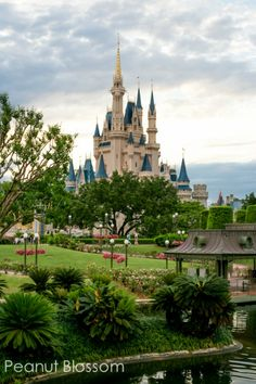 12 crucial tips for photographing your Disney vacation