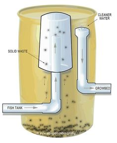anatomy of an aquaponic fish tank filter - Google Search