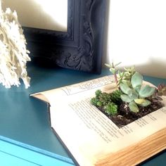 DIY book succulent planter -- so easy and so cute! Tutorial on the blog this week! Check it out!