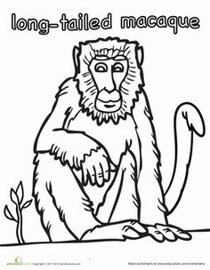 Long Tailed Macaque Coloring Page