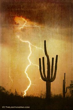 Saguaro Lightning storm V by Striking Photography by Bo Insogna, via Flickr