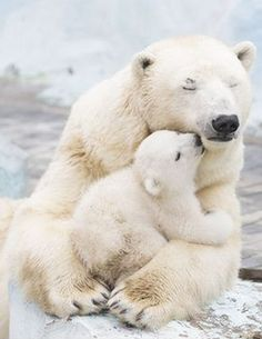 Pin by Mr. Hap on Cute Baby Animals Pin by Mr. Hap on Cute Baby Animals – Cute Baby Animals, Animals And Pets, Funny Animals, Mother And Baby Animals, Animals With Their Babies, Animals Kissing, Artic Animals, Animal Babies, Small Animals
