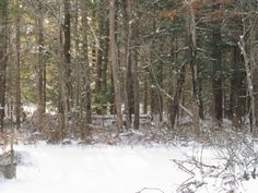 Prince Snow Farm: Snow Day