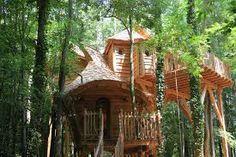 cabane dans les arbres canada - Recherche Google