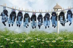 Notta Bear Newfoundland picture, FANTASTIC! Try doing this when they are grown