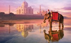 Man, elephant and the Taj Mahal reflected on the river in India