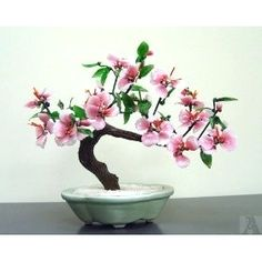 ●☺Your #bonsai inspiration for today!♣☺       #BonsaiInspiration