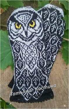 ХОББИ Owl, Bird, Owls, Birds, Birdwatching