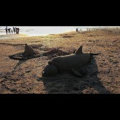 イルカの砂の像驚きの出来栄えでした a sand scluptures with dolphins #seaside #sunset #sandsclupture #sclupture #dolphin #exellent #enoshima #shonan #motozplay #砂の像 #イルカ #江ノ島 #片瀬海岸 #湘南 #夕焼け