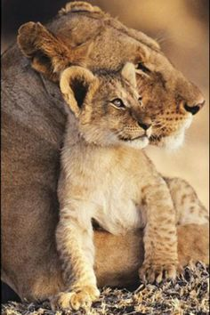Mother's love. ❤️