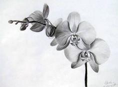Resultado de imagen para drawing color pencils orchid