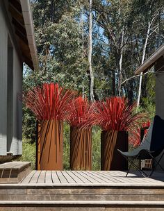 steel pipe planters with Red lomandra