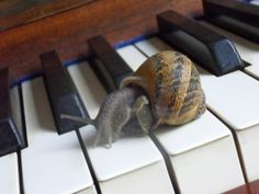 The solitay Snail