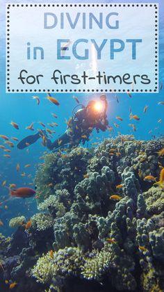 #diving #Egypt