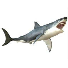 Great White Shark Canvas Art - Corey FordStocktrek Images (33 x 25)