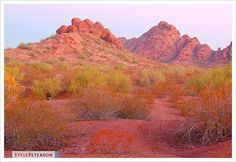 A photo showing the mystical red rock buttes of Papago Park at sunrise in Phoenix, Arizona. Photo by Don Peterson. Beauty Around The World, Around The Worlds, Oak Creek Canyon Arizona, Places Ive Been, Places To Go, Visit Phoenix, Desert Botanical Garden, I Want To Travel, Monument Valley