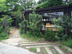 くるみの木 場所: Nara, 奈良県